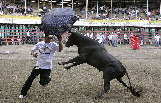 Crazy-bull_1459384i