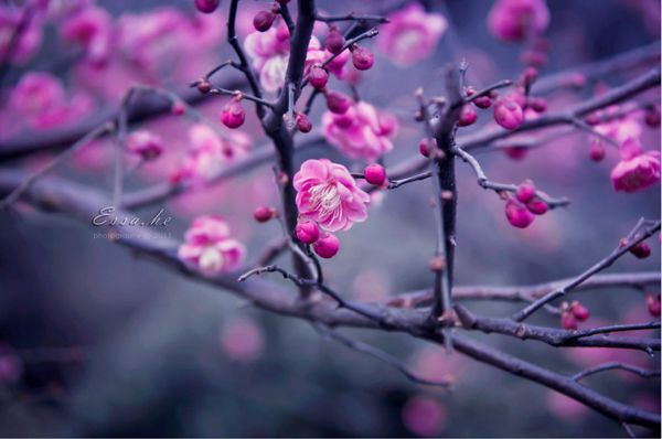 spring photography_11