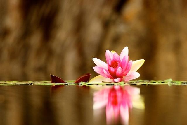 60 beautiful flower photographs