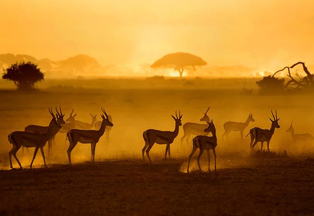 amazing sunset photographs