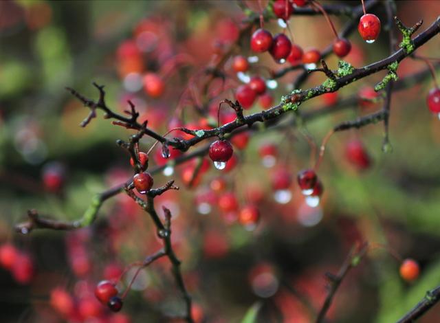 55 stunning dew drop photographs