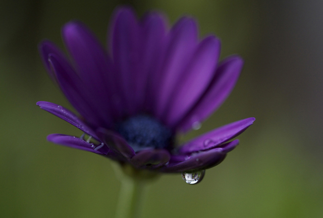 55 stunning dew drop photographs