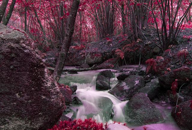 deep forest photographs