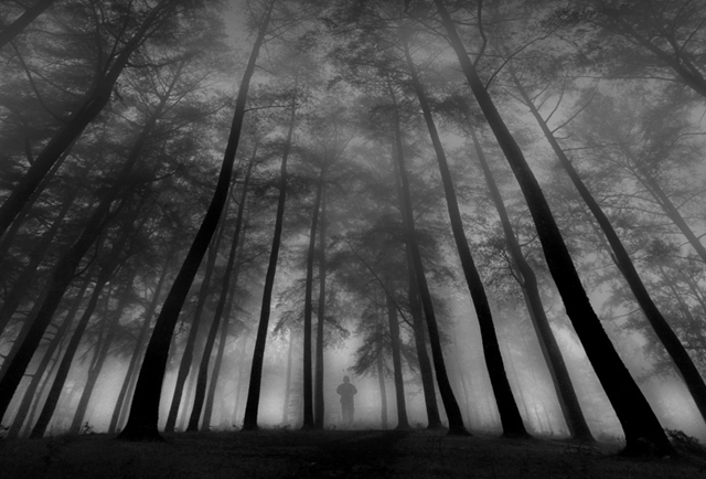 deep forest photographs