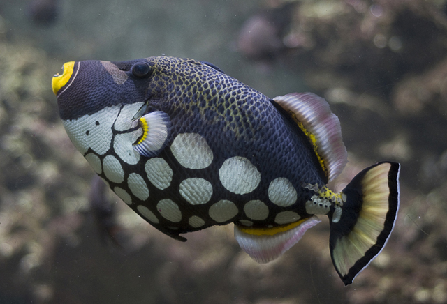 fish photographs