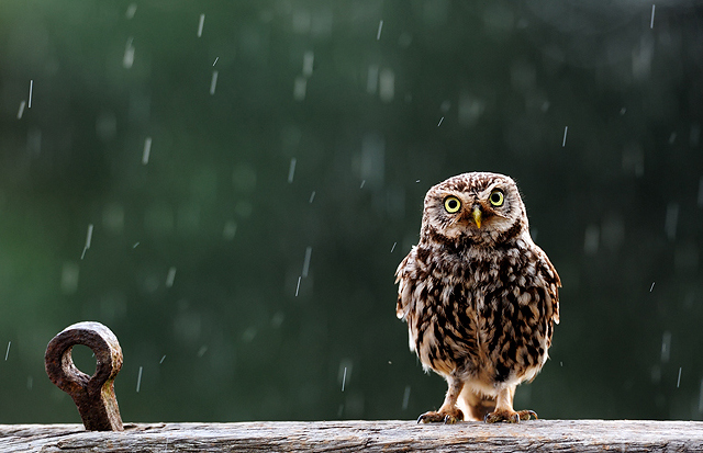 lovely photographs of rain