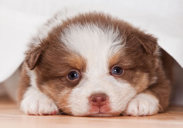cute photographs of puppies