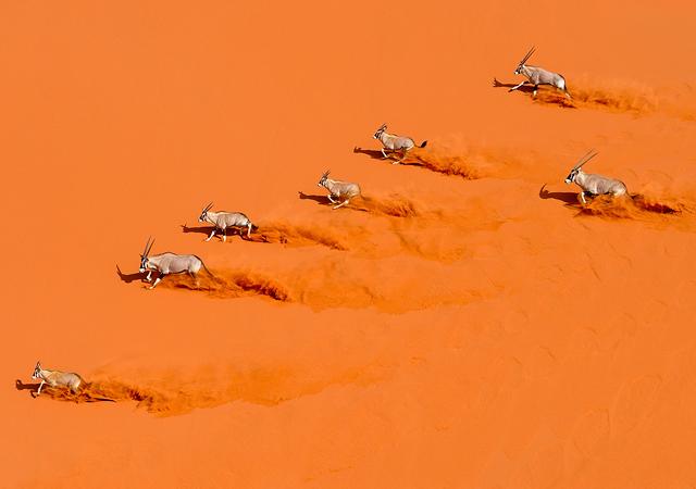 Desert Choreography by Marsel van Oosten