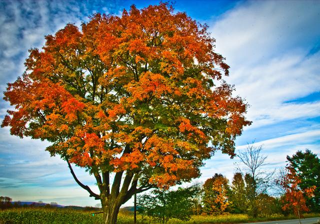 tree photographs