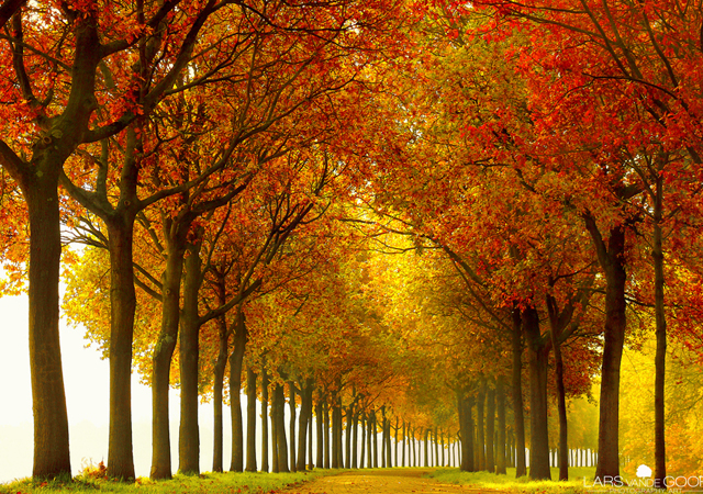 photographs of trees