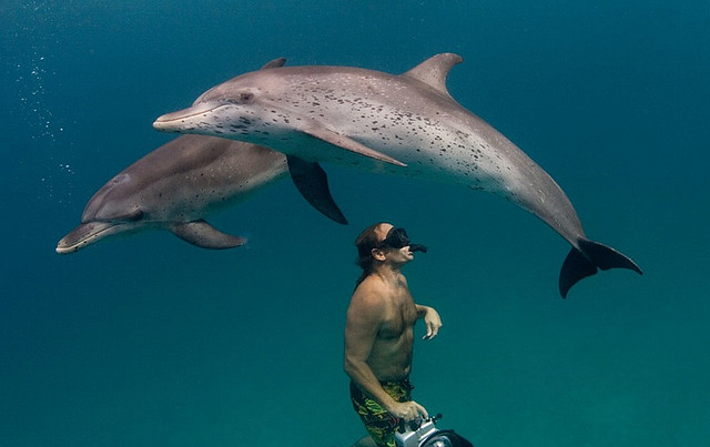 nice collection of dolphin pictures