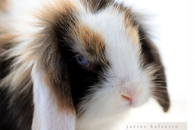 cute and lovable photographs of rabbits