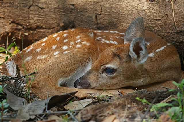 beautiful cute Deer