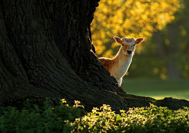 deer photographs