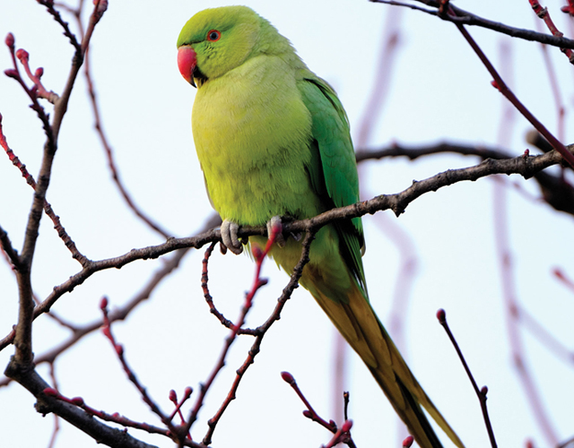 cute parrot pictures