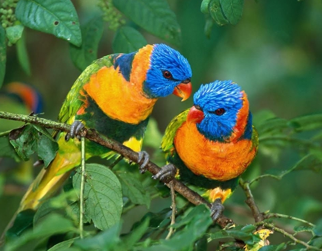 cute parrot pictures