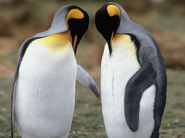 amazing photographs of penguins