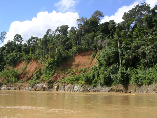 Amazon-Tropical-rainforest-Peru