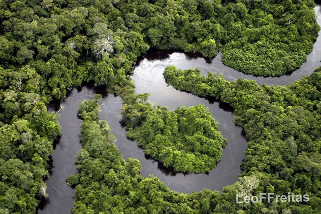 Amazonian-Forest-and-Renato-River