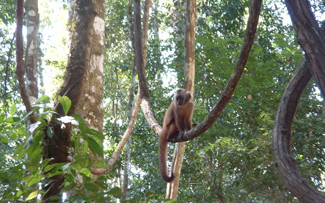 Amazonian-Rainforest-Monkey-Island-Peru