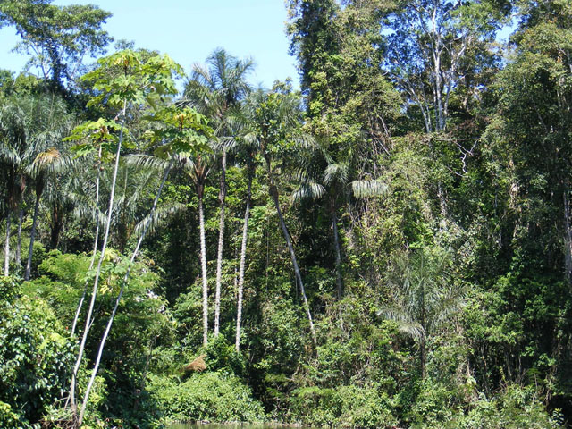 Amazonian-rainforest