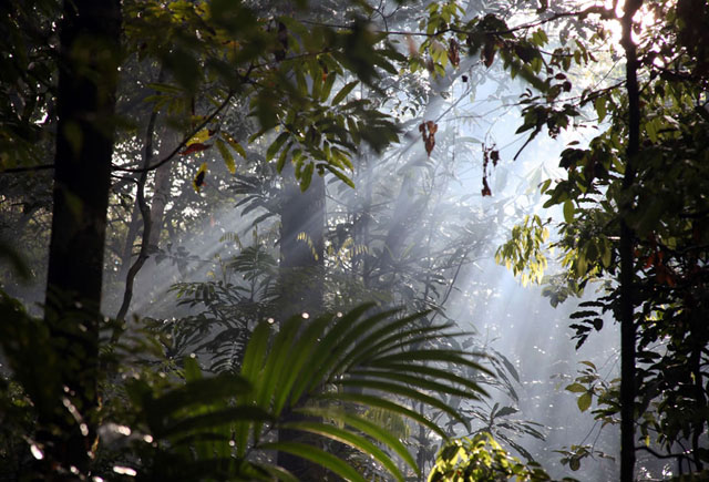 Streams-of-light-in-the-Amazonian-mist