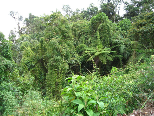 bamboo-and-ferns-in-amazon-rainforest