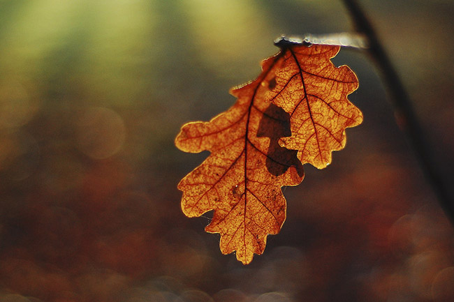 beautiful autumn fall photographs