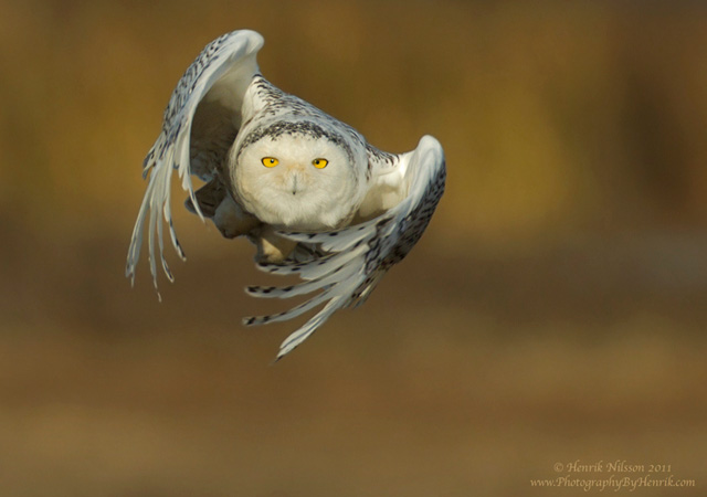 Into Flight by Henrik Nilsson