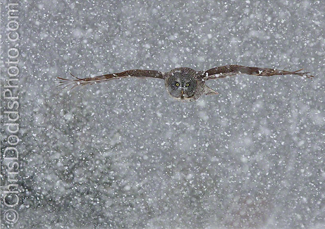 SNOWFLIGHT by Christopher Dodds