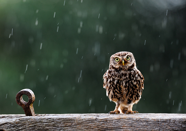 Singing in the rain by Craig Churchill