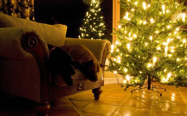 beautiful christmas photography