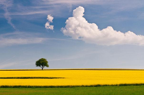 beautiful illustration of landscape photographs