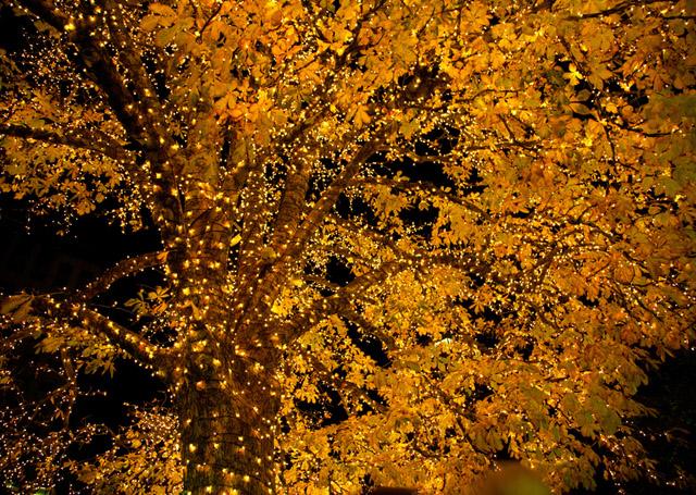 Holiday Lights by Jeremy Hall