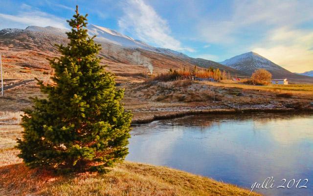 A Christmas Tree by Gunnlaugur Jónsson