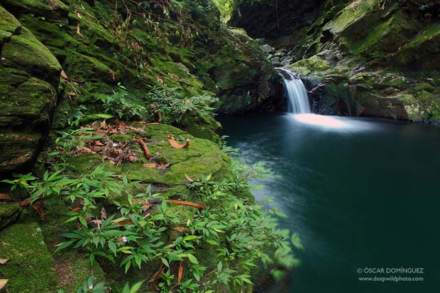 Bach Ma National Park. Vietnam.