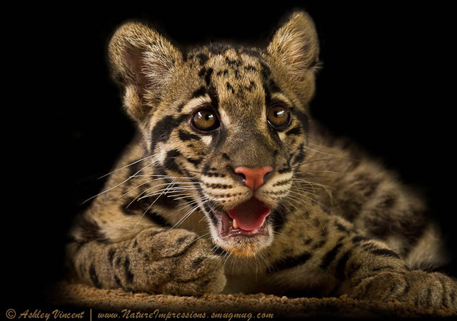 Sweet Molasses by Ashley Vincent