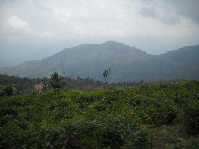 Agasthiyamalai,-tamilnadu