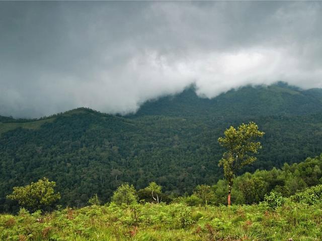 Biligiriranga Hills,-Chamarajanagar-District
