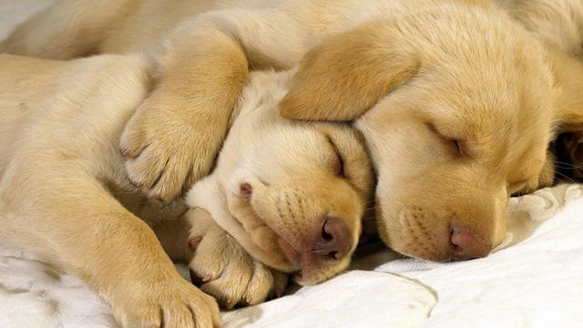 30 Cute golden retriver photographs