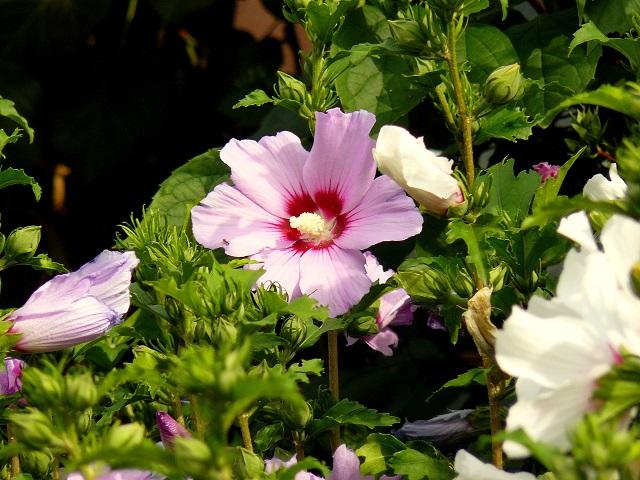 Transylvania Oradea Flowers