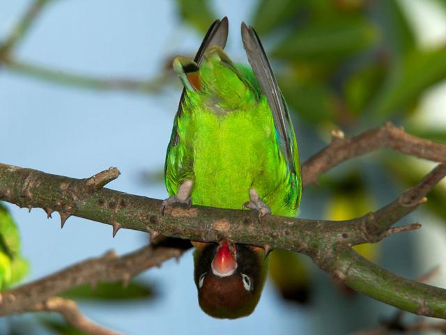beautiful love birdsin tree pictures