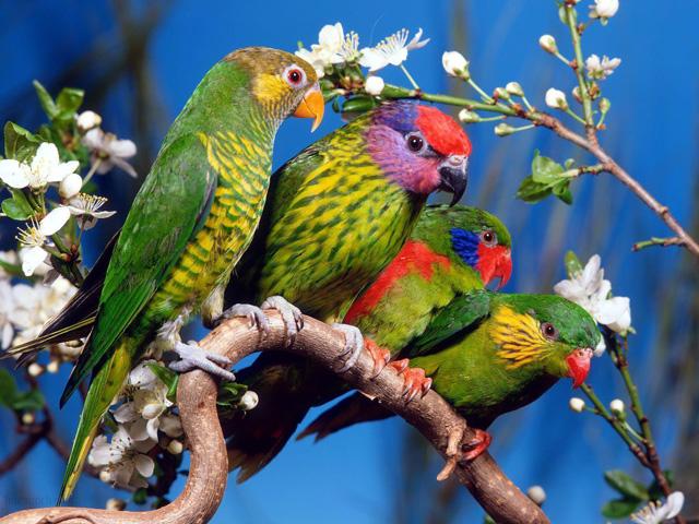 pets love birds pictures