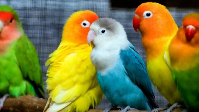 beautiful love birds photographs