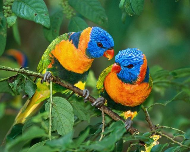 love birds photos