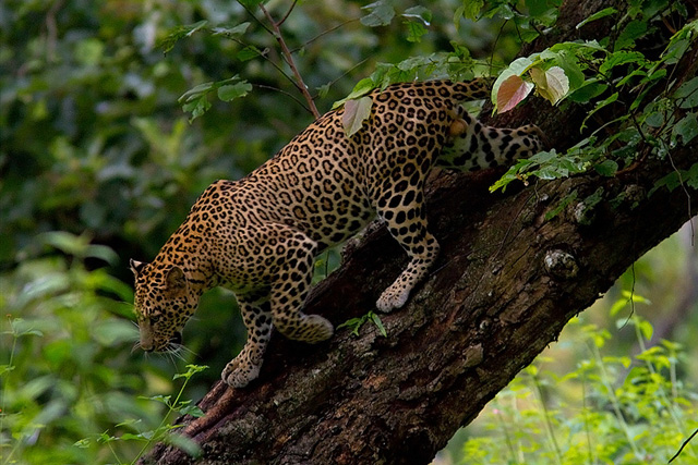 Bandipur-National-Park