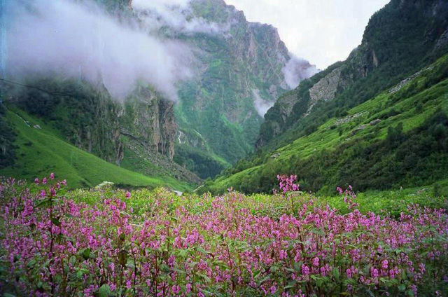 Valley-of-Flowers,-Uttaranchal