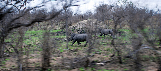 Two Rhino's by Mick