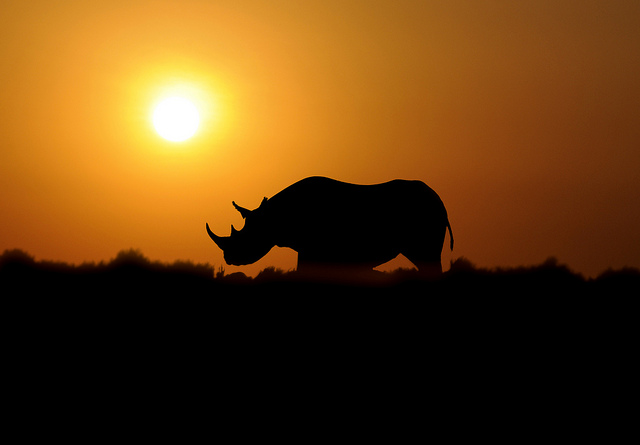BLACK RHINO by RayMorris