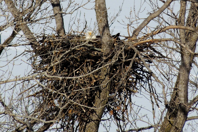 Eagle-birds-Nest
